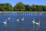 UK, LONDON, Kensington Gardens, Round Pond, and swans, UK19903JPL