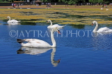 UK, LONDON, Kensington Gardens, Round Pond, and swans swimming, UK9090JPL