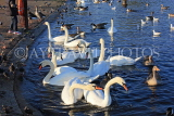 UK, LONDON, Kensington Gardens, Round Pond and Swans, UK12018JPL
