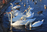 UK, LONDON, Kensington Gardens, Round Pond and Swans, UK12019JPL