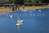 UK, LONDON, Kensington Gardens, Round Pond and swans, UK10013JPL