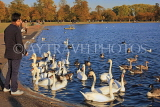 UK, LONDON, Kensington Gardens, Round Pond with Swans and Greylag Geese, UK12044JPL