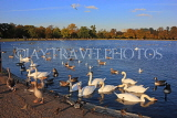 UK, LONDON, Kensington Gardens, Round Pond with Swans anf Geese, UK12021JPL
