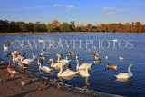 UK, LONDON, Kensington Gardens, Round Pond with Swans anf Geese, UK12022JPL