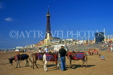 UK, Lancashire, BLACKPOOL, Blackpool Tower, beach and donkeys, UK4914JPL