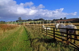 UK, Northumberland, Denwick, farm, fence and horses, UK5869JPL