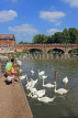 UK, Warwickshire, STRATFORD-UPON-AVON, River Avon, feeding the Swans, UK20241JPL