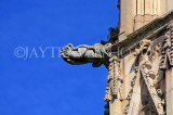 UK, Yorkshire, YORK, York Minster, gargoyle on building, UK9892JPL