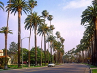 USA, California, LOS ANGELES, Beverly Hills street and palm trees,  US3900JPL