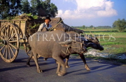 VIETNAM, Tay Ninh, buffalo and cart, rural scene, VT164JPL