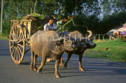 VIETNAM, Tay Ninh, buffalo drawn cart, VT382JPL