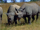 ZIMBABWE, Imire Game Ranch, Black Rhinos, ZIM119JPL