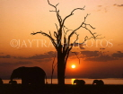 ZIMBABWE, Lake Kariba, Elephants and sunset, ZIM38JPL