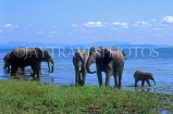 ZIMBABWE, Lake Kariba, herd of Elephants, ZIM18JPL
